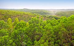 PEFC celebró el Día Mundial del Medio Ambiente con más de 2 millones de hectáreas certificadas en España