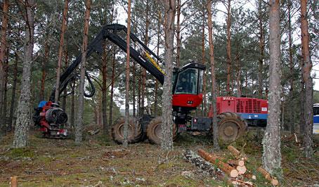 El 7º Congreso Forestal Español aguarda tu aportación