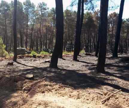 MADEREA lanza un buscador específico de subastas de madera