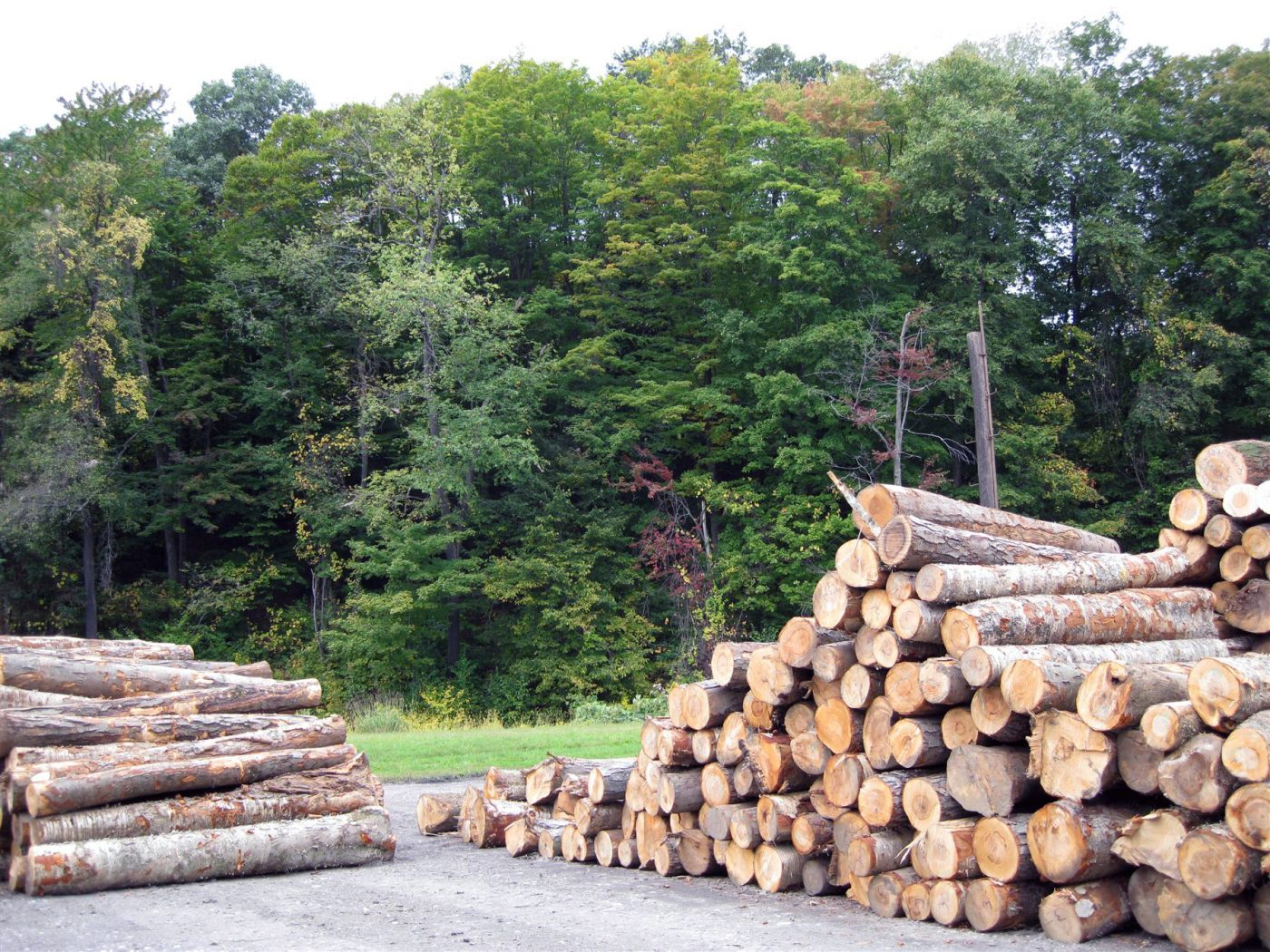 Se disparan las licitaciones de madera de montes públicos