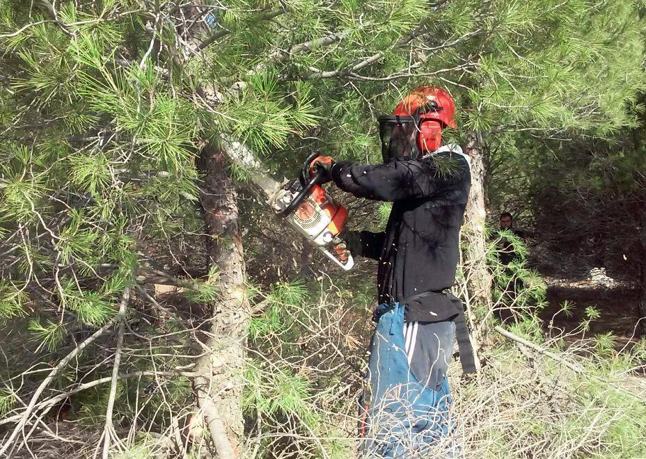 Los profesionales forestales autónomos consideran insuficientes las medidas del Gobierno