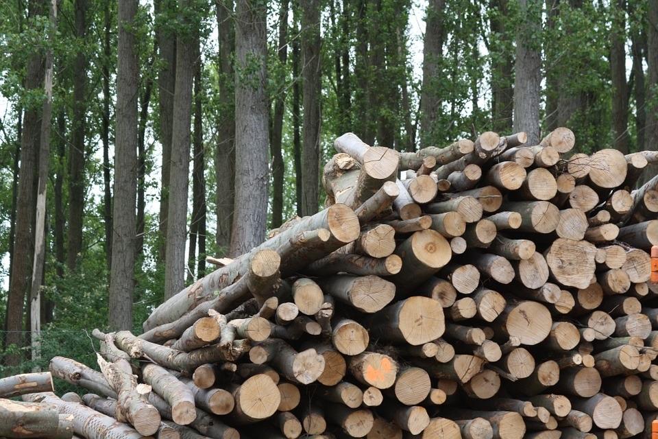 COSE defenderá el uso de la biomasa forestal en GENERA