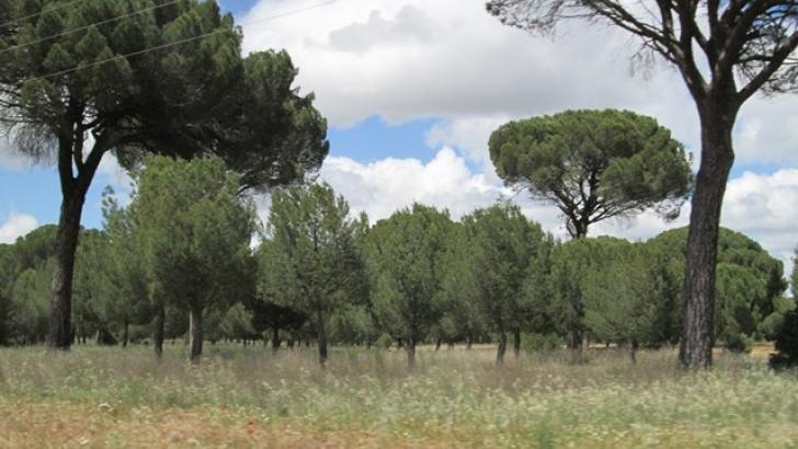 COSE pide que la investigación sea aplicada para maximizar los resultados de la gestión forestal