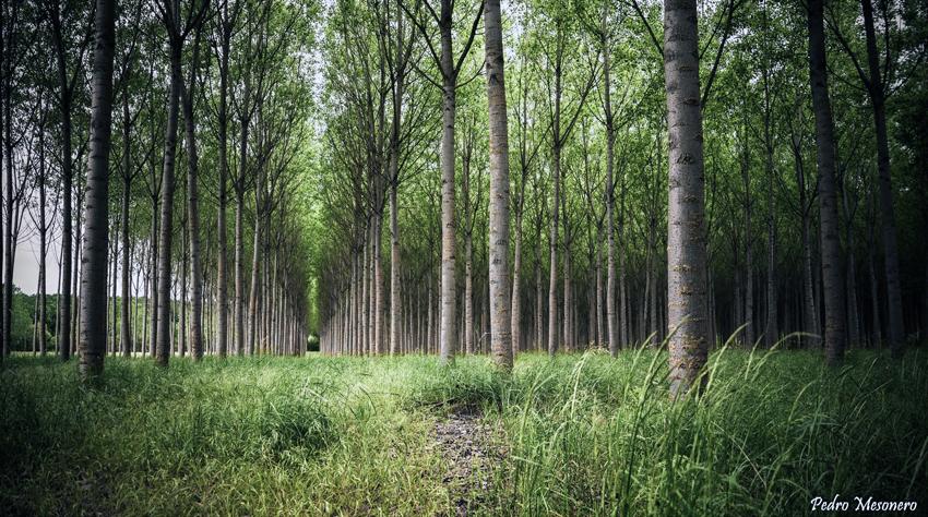 CESEFOR mantiene su apoyo al sector forestal y su industria