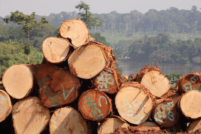 GREENPEACE denuncia la dejadez de las administraciones públicas ante la entrada de madera ilegal en España