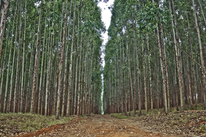 COSE y AFG convocan el seminario «Objetivos estratégicos de política forestal»