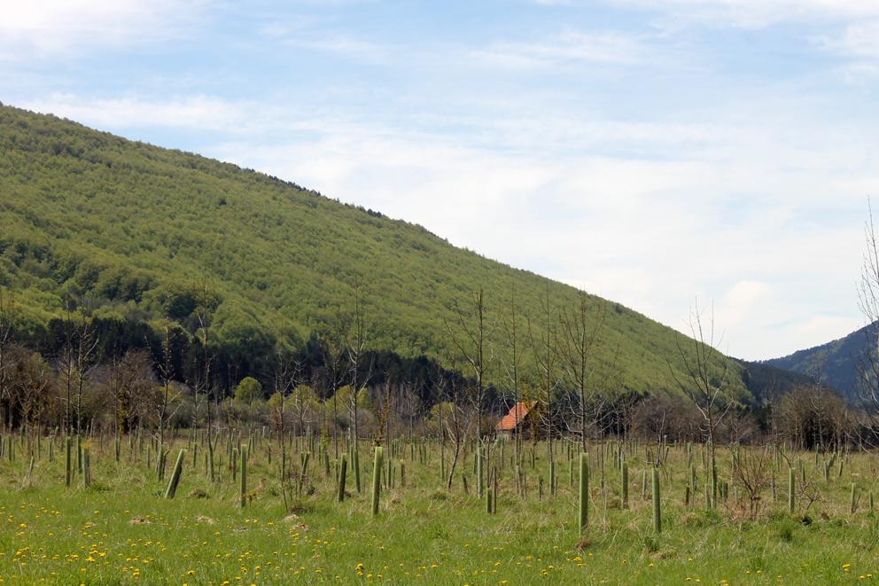 Barace calcula que ha plantado 20.000 árboles en 15 años.