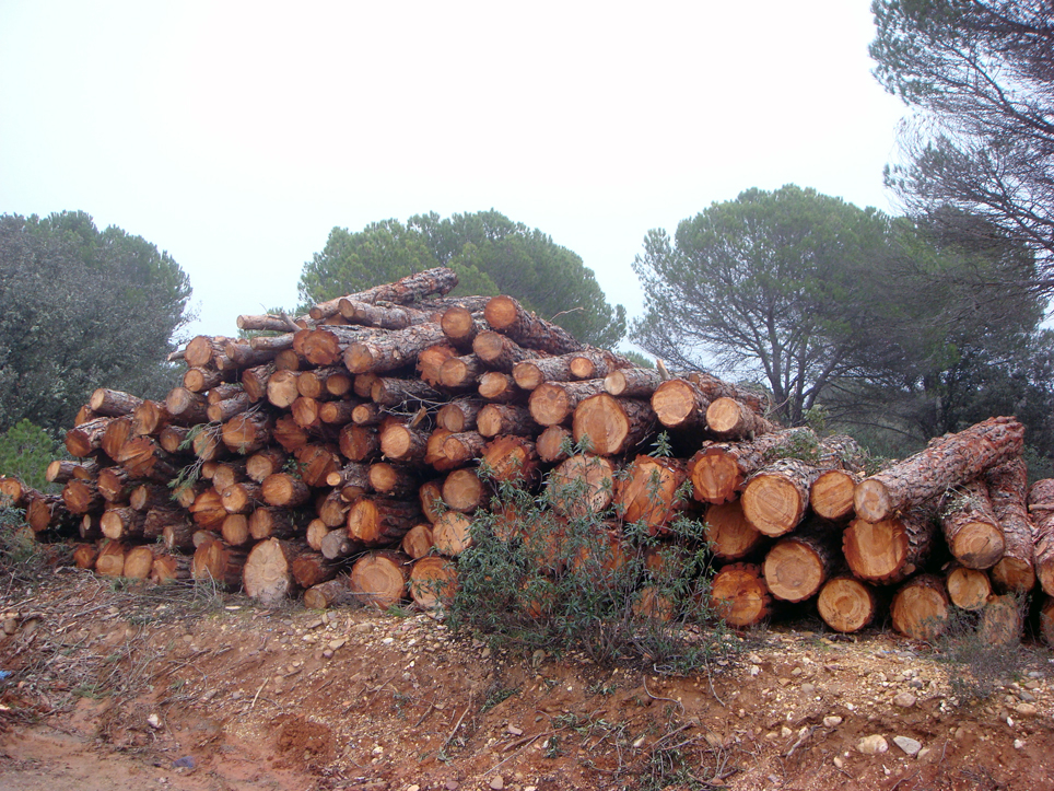 """FAFCYLE reivindica la puesta en marcha del """"Asesoramiento Forestal"""""""