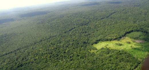 Las concesiones forestales comunitarias como una solución a la tala ilegal en las selvas de Guatemala