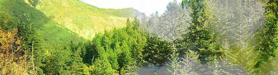 El futuro pasa por los bosques