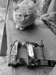 acc3-gatos