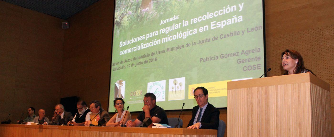 COSE, FETRUSE y MAGRAMA ofrecen una propuesta sectorial para regular la actividad micológica