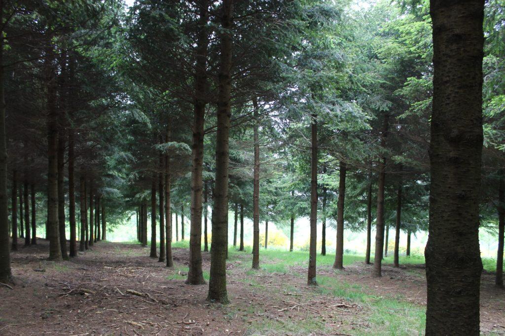 En el nuevo proyecto de ordenación del monte (2016) se dará continuidad a su función principal de producción de madera de coníferas.