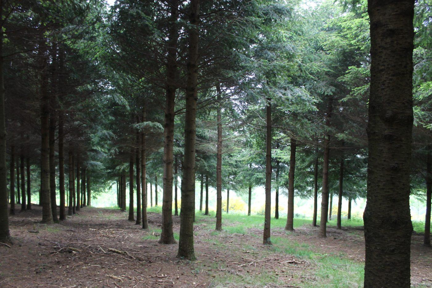 La certificación forestal en España se consolida