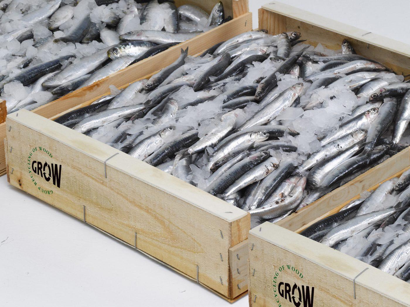 """Los envases de madera para pescado """"fresco"""" ganan reconocimiento internacional"""