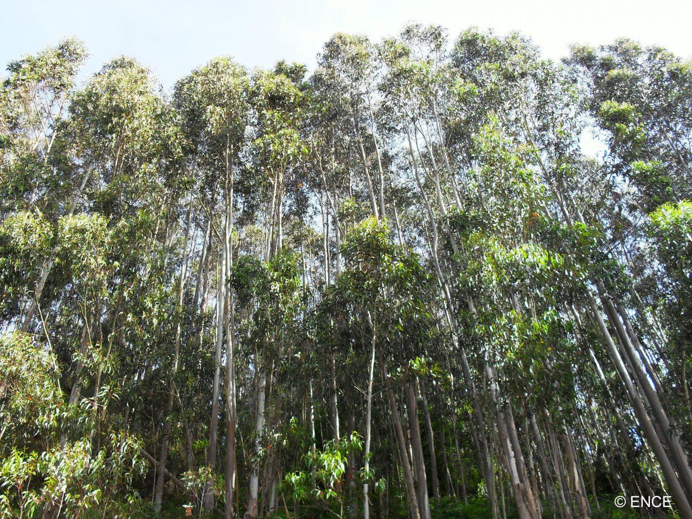 Los bosques gallegos apuestan por certificar su sostenibilidad e incorporar las últimas tecnologías forestales