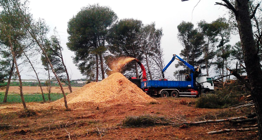 COSE defiende la utilización de biomasa forestal con fines energéticos y lamenta su escaso desarrollo