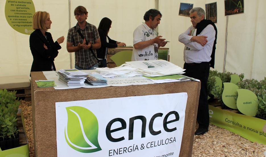 El Grupo ENCE consume 3,7 millones de metros cúbicos de madera al año