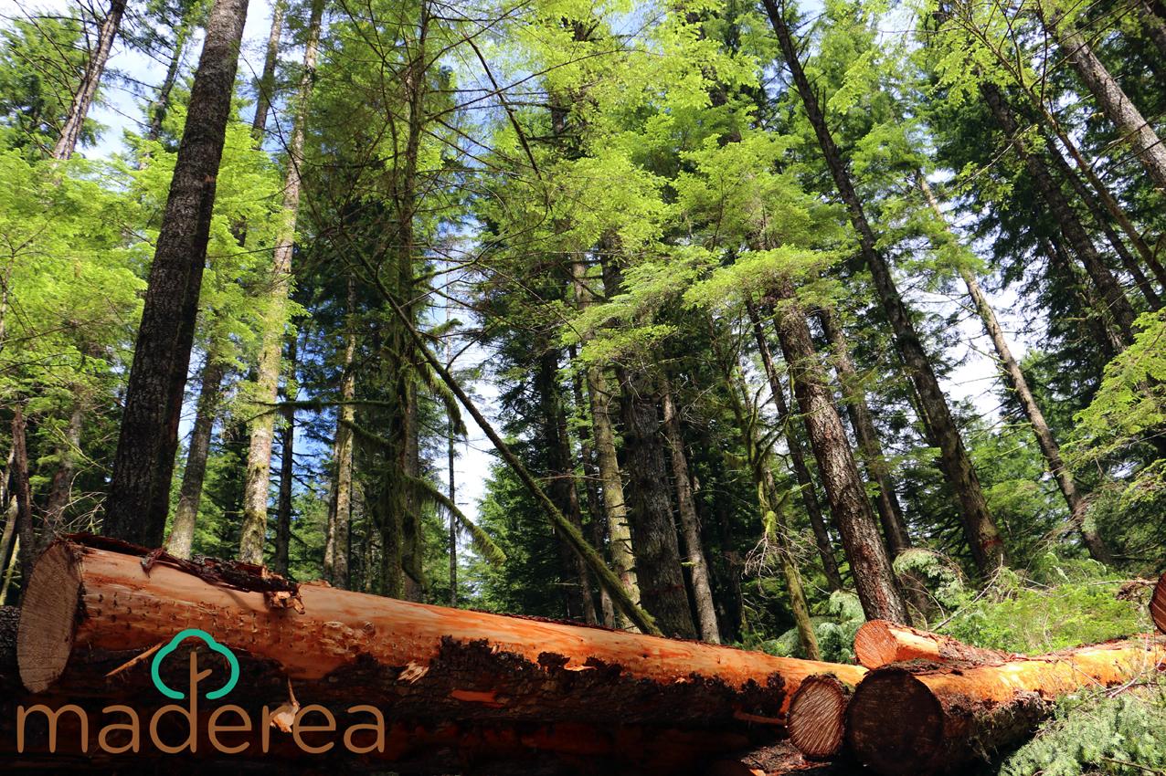 Las subastas de madera en España generan 41,5 millones de euros en el segundo trimestre del año