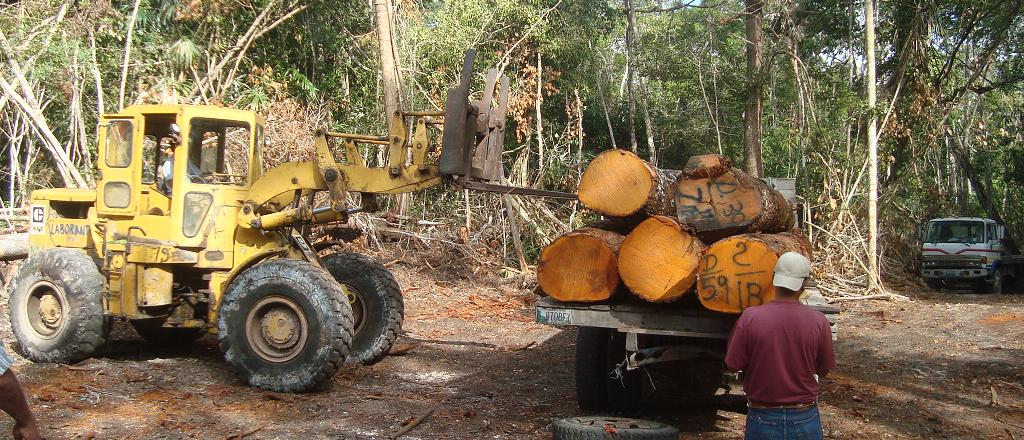 COPADE contribuye al incremento de la exportación de madera de Guatemala