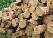 PROFOAS_madera