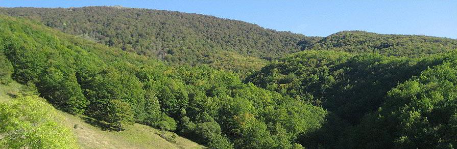 PROFOAS convoca una Jornada de Asociacionismo y Certificación Forestal