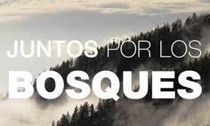 Gran repercusión de la iniciativa JUNTOS POR LOS BOSQUES