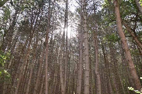 Seminario «Bioeconomía: Gestión Forestal Sostenible»