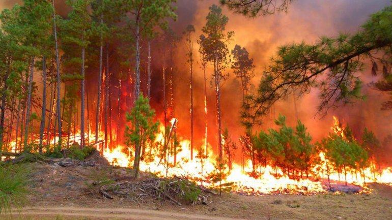 Taller de Incendios Forestales en Sevilla