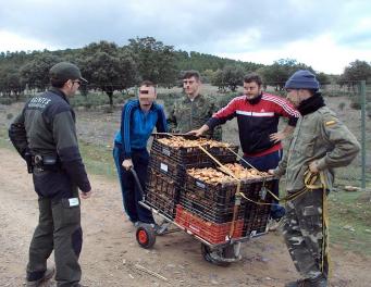 COSE presentará el proyecto MicoPlus a propietarios forestales privados de la Región de Murcia