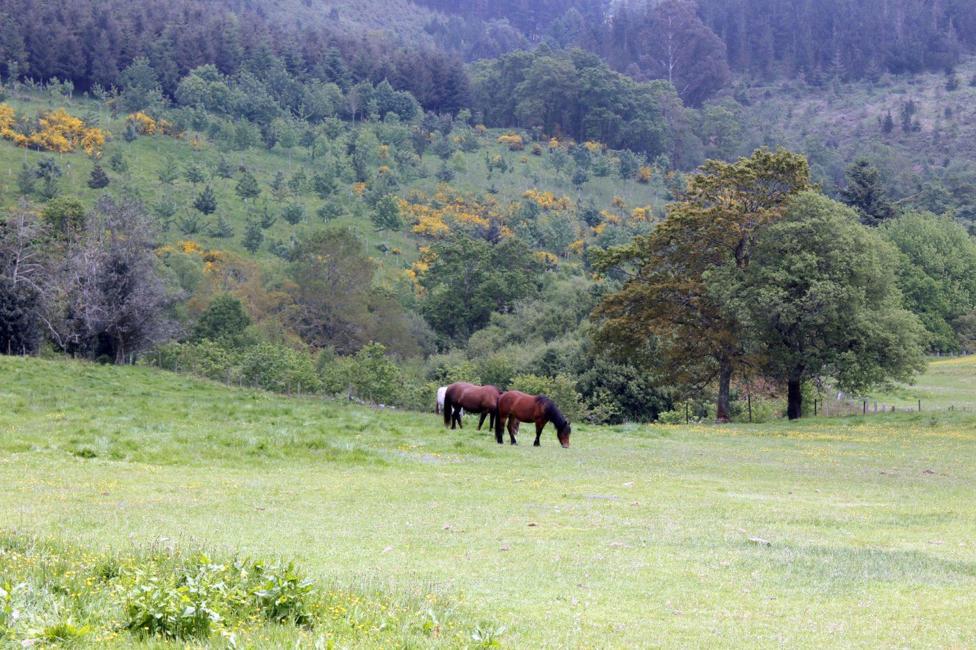 Más de 6.200 fincas rústicas se vendieron el pasado año en Galicia