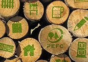 PEFC celebra el Día Internacional de los Bosques con un crecimiento de la superficie forestal certificada