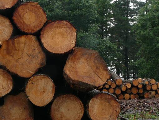 El sector de la madera de Euskadi celebrará su BASKEGUR Eguna