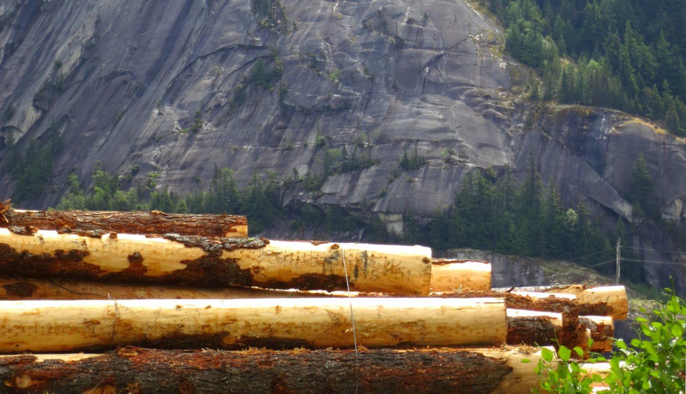 Las subastas de madera en España generan 17 millones de euros en el tercer trimestre