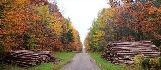 Las subastas de madera en España generan más 17 millones de euros en el tercer trimestre del año