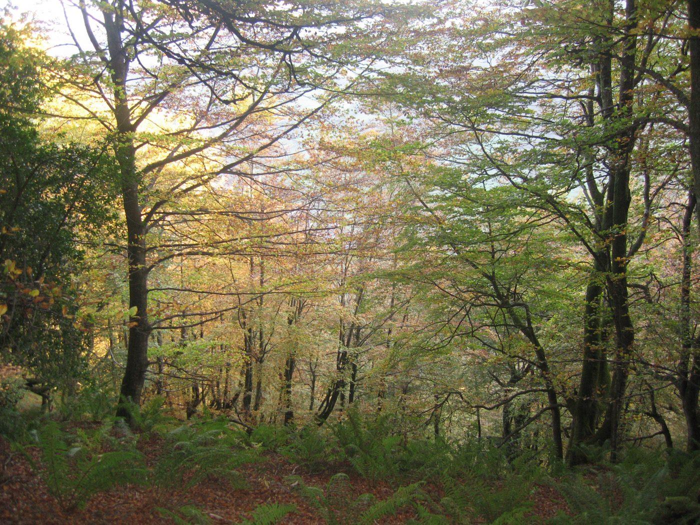 Bosques y Energía en el Día Internacional de los Bosques