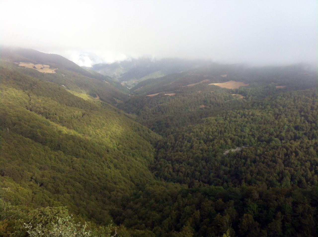 Bosques gestionados, revitalizados