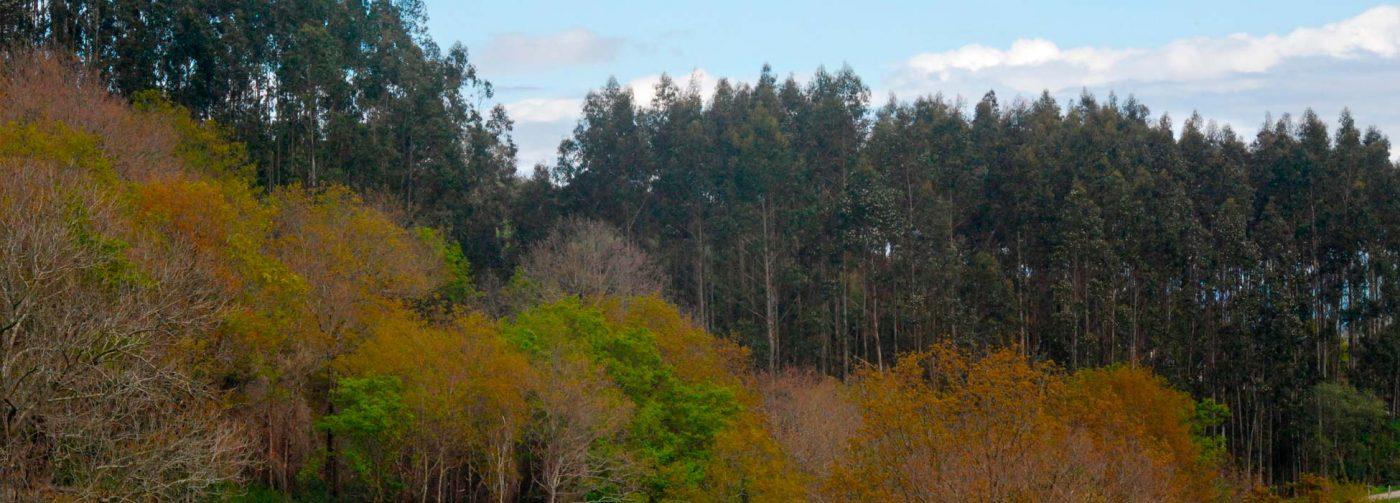 El Gobierno de Cantabria y ASPAPEL colaborarán para mejorar la competitividad del sector forestal