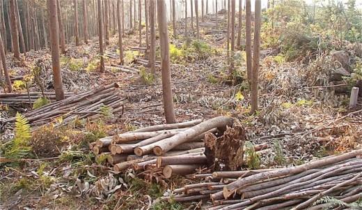 Castilla y León alberga cerca de cinco millones de hectáreas forestales