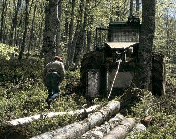 ASEMFO edita el X Estudio de Inversión y Empleo en el Sector Forestal