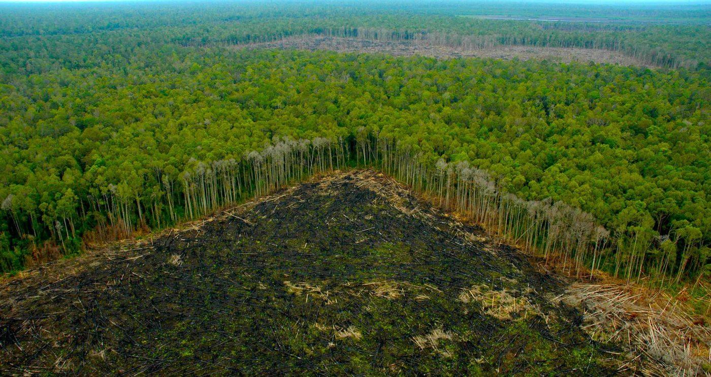 GREENPEACE documenta el peligro que corren las áreas protegidas de la Amazonia