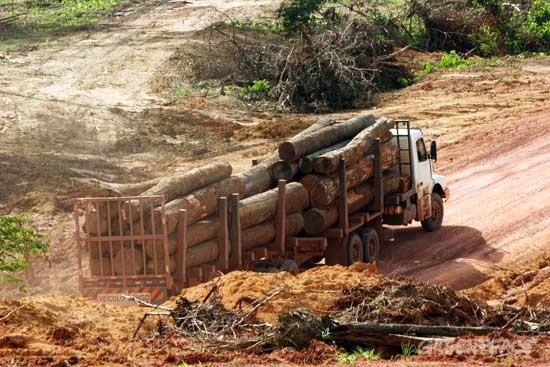 """AEIM pone en marcha el """"comité de expertos"""" EUTR sobre Brasil"""