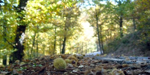 JUNTOS POR LOS BOSQUES acoge positivamente la iniciativa del Plan de Actuación Forestal promovida por el MAPAMA
