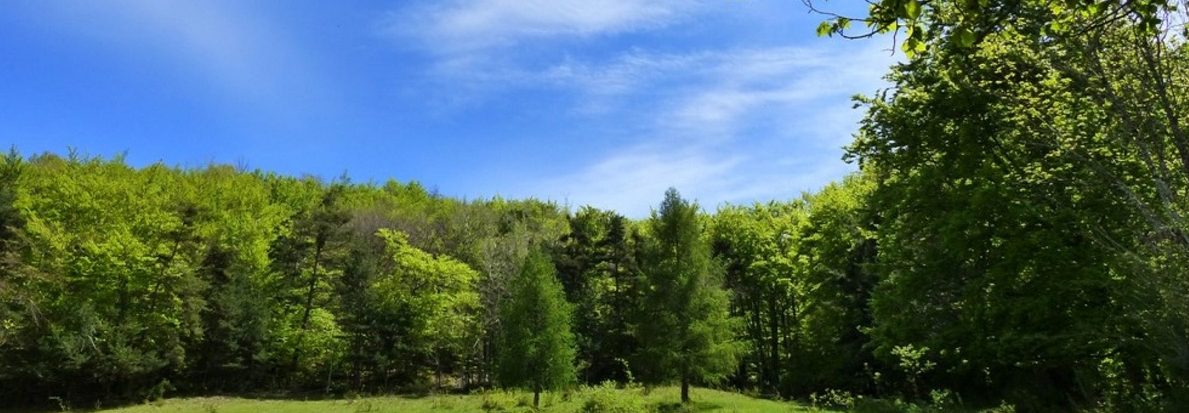 Bosques por el Clima