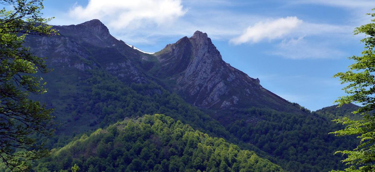 Nace FINCASFORESTALES.COM, primera web inmobiliaria especializada en activos forestales
