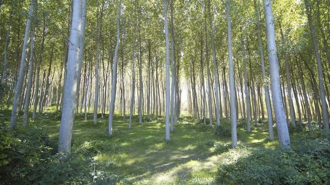 Las subastas de madera en España generan más de 13 millones de euros en el primer trimestre de 2017