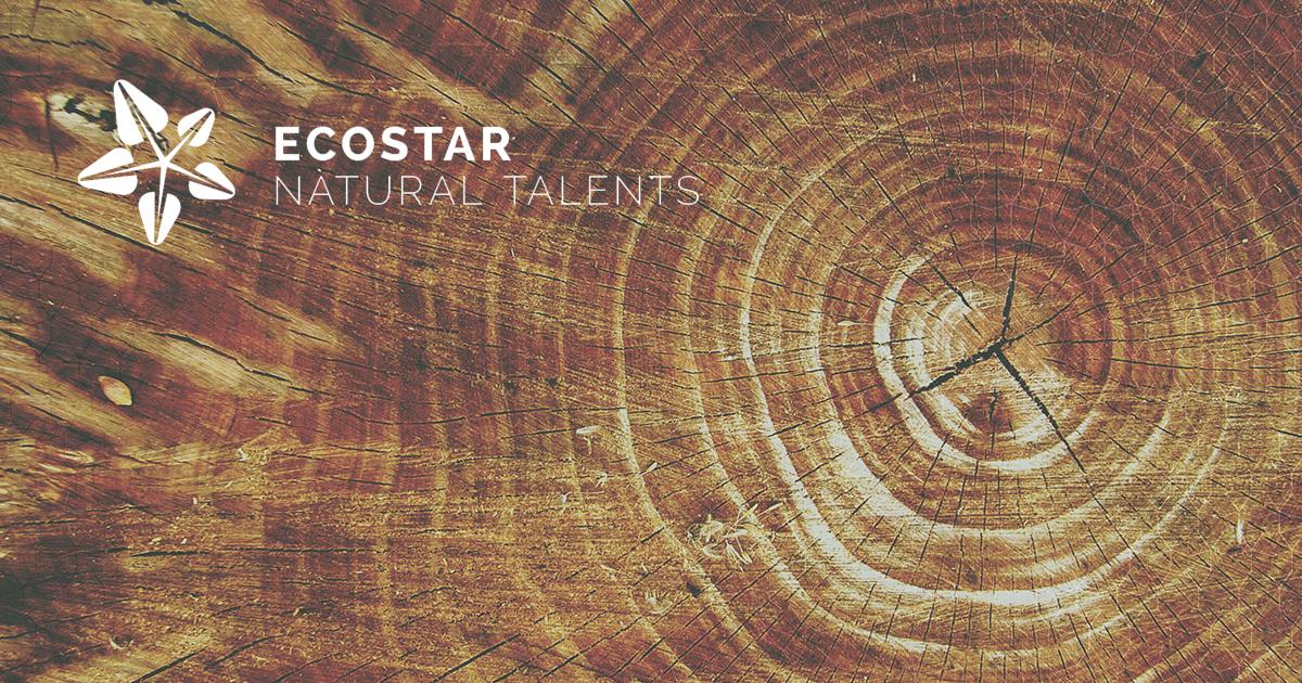 ECOSTAR: Una iniciativa para promover el emprendimiento en el sector forestal