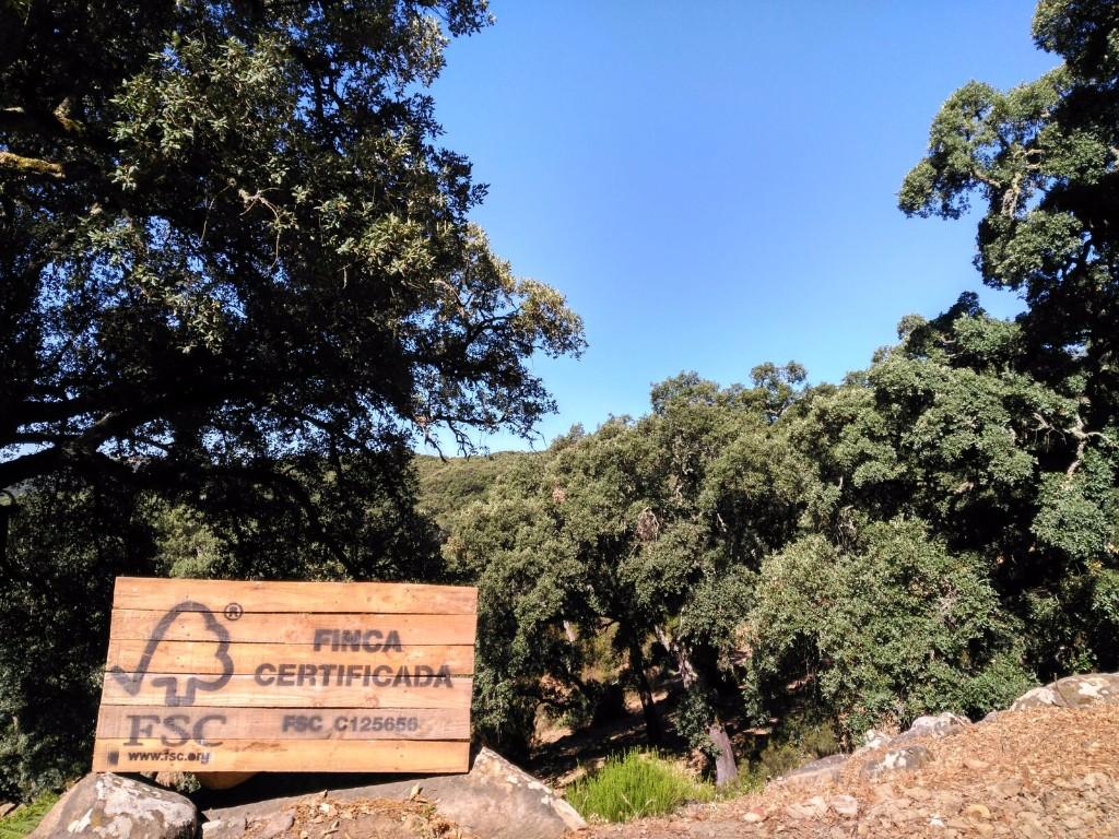 FSC patrocina el Congreso Forestal Español