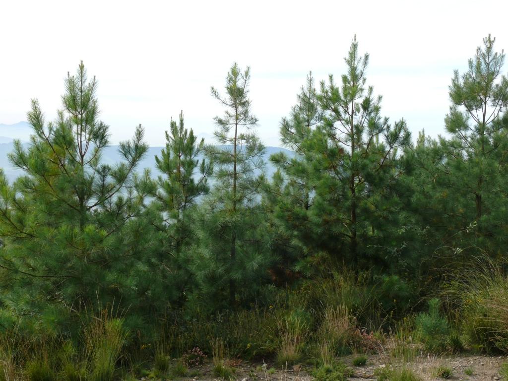 Curso: «Bioeconomía forestal en el sur de Europa: Oportunidades y desafíos»