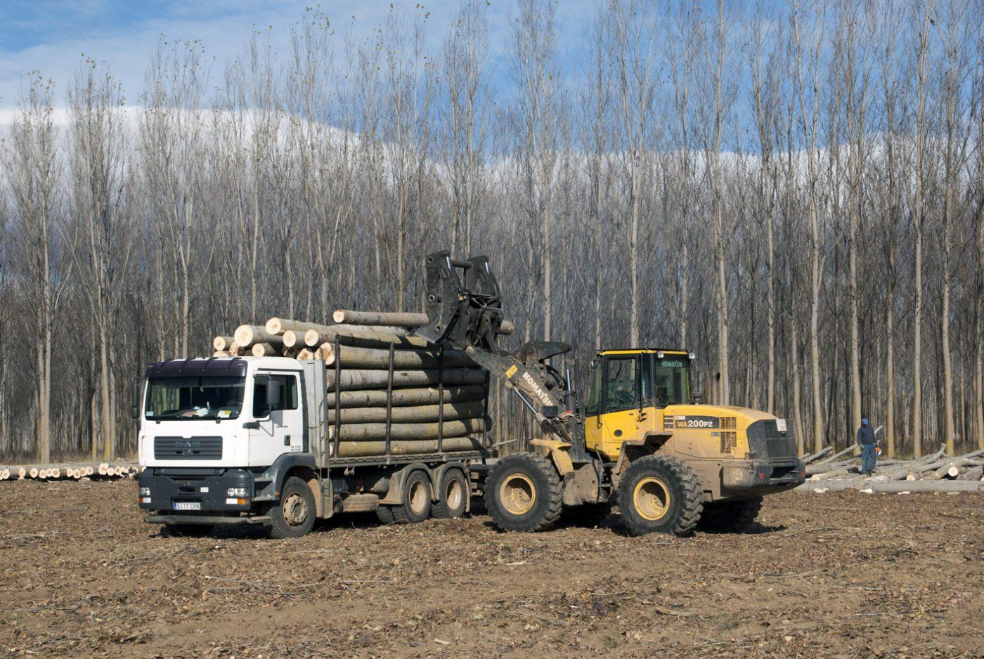 Se estabilizan las subastas de madera en el tercer trimestre del año
